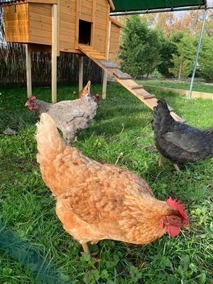 les 4 poules du camping bel air de bordeaux pour une démarche plus écologique